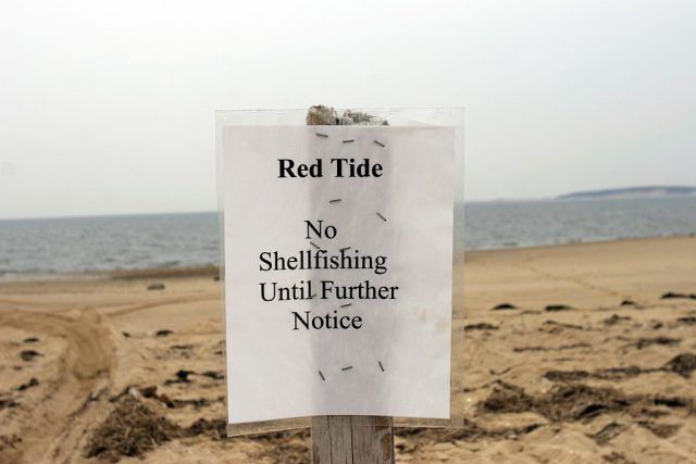 A sign declares Indian Neck beach closed to shellfishing in Cape Cod Bay of Welfeet Harbor.
