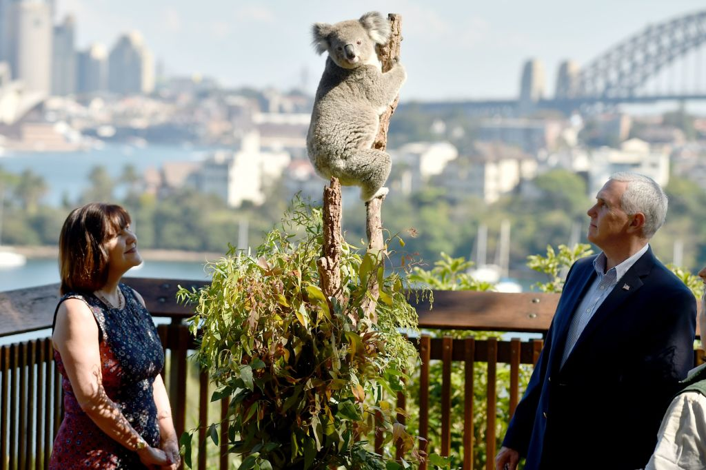 Mike and Karen Pence look up at a koala in Sydney