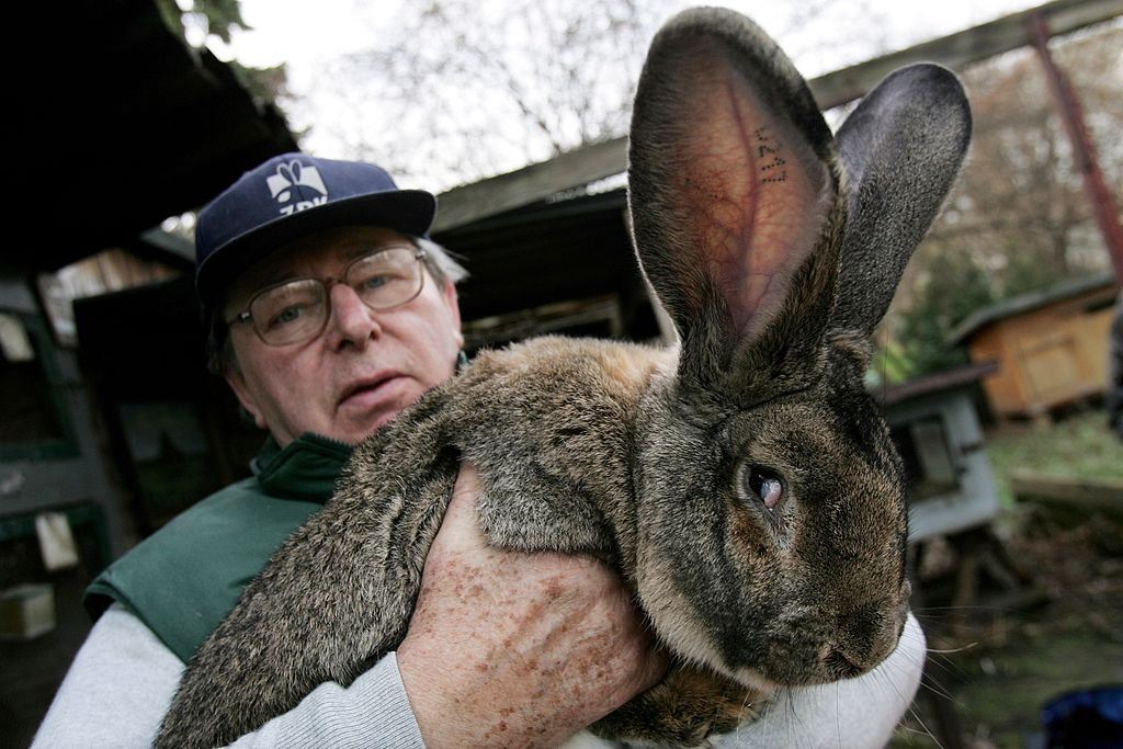 a farmer in green with a giant brown rabbit