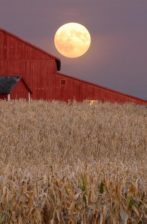 Harvest moon rises