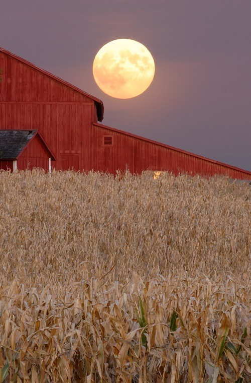 Harvest moon rises