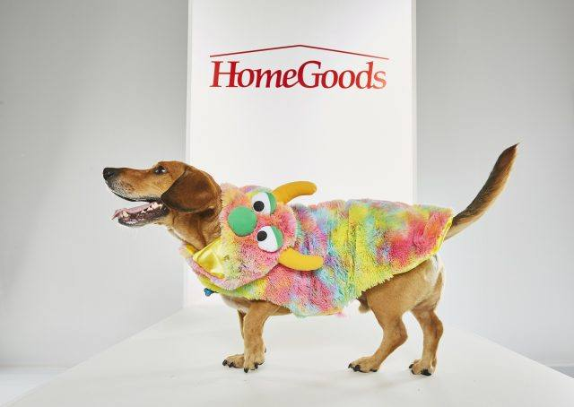 Home Goods Dog Halloween Costumes