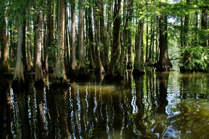 a swamp in North Carolina
