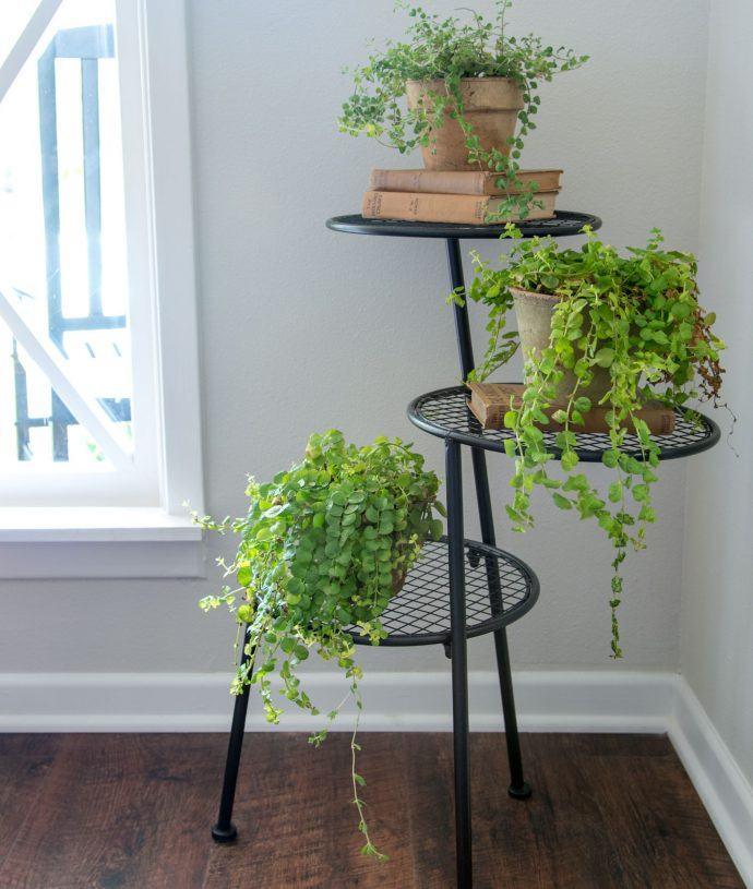 Joanna Gaines Thinks Everybody Should Have These Beautiful Houseplants at Home