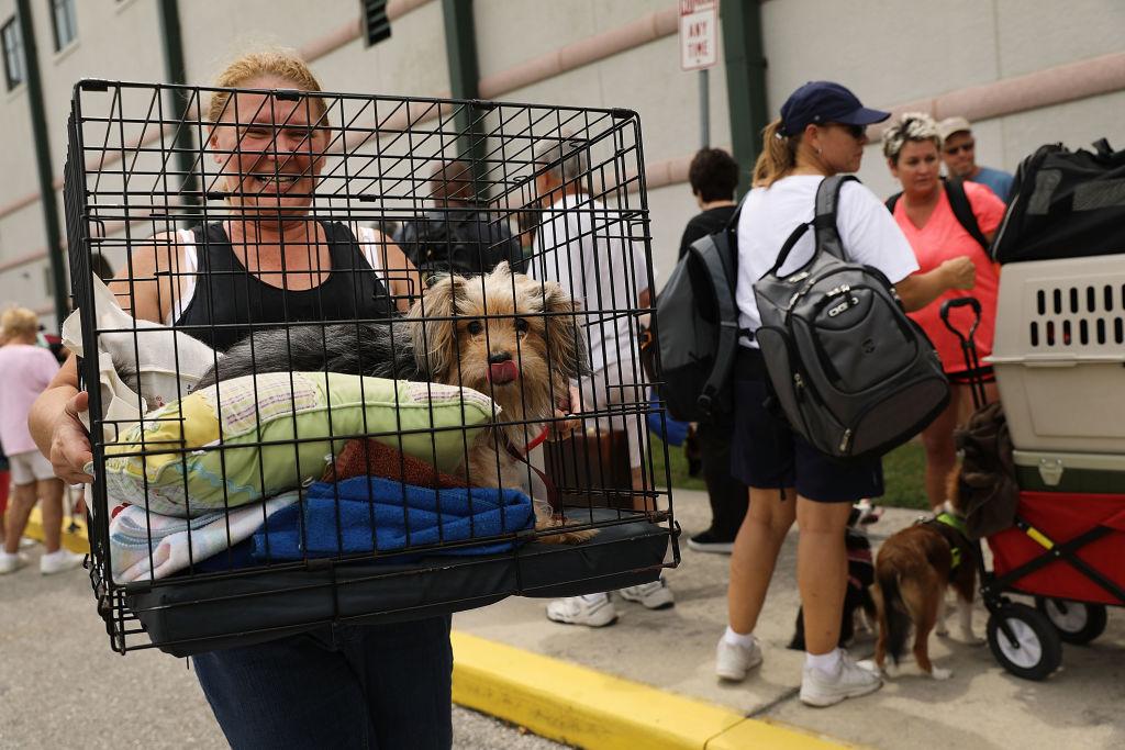 Dog Florida Hurricane