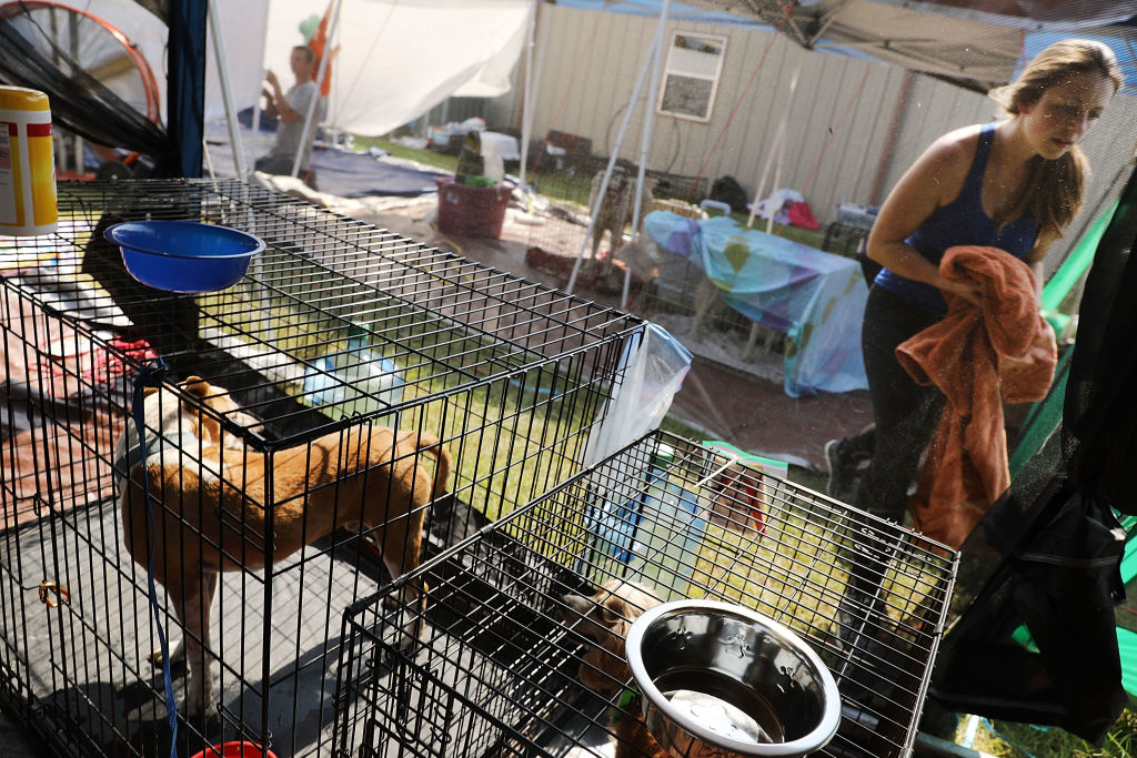 Dogs rescued cages