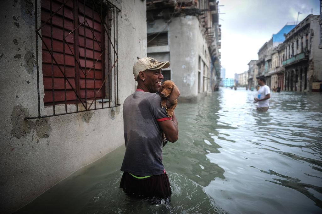 Dog rescue flooding