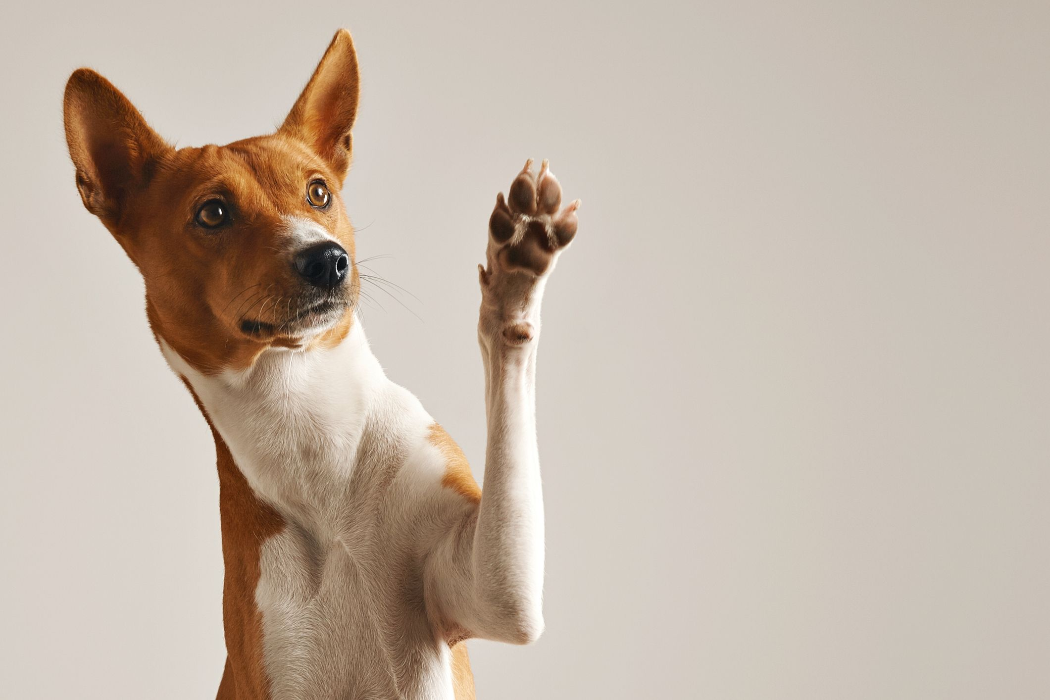 Dog with paw up