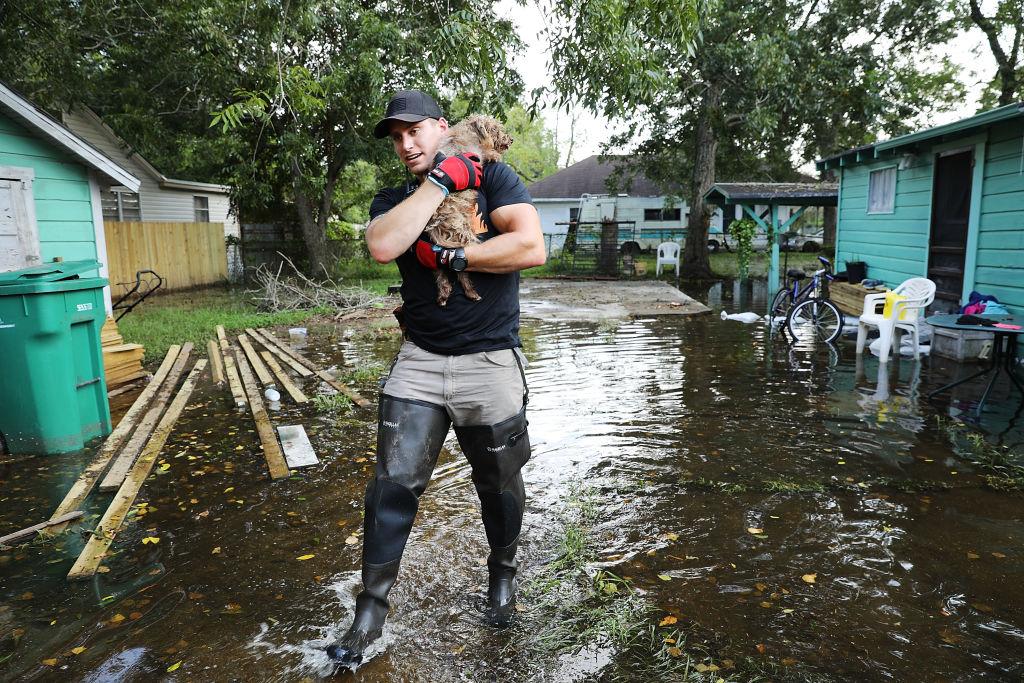 Rescued dog hurricane