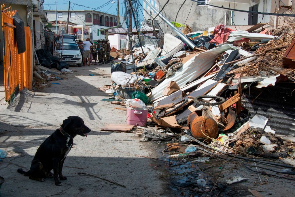 Abandoned dog hurricane