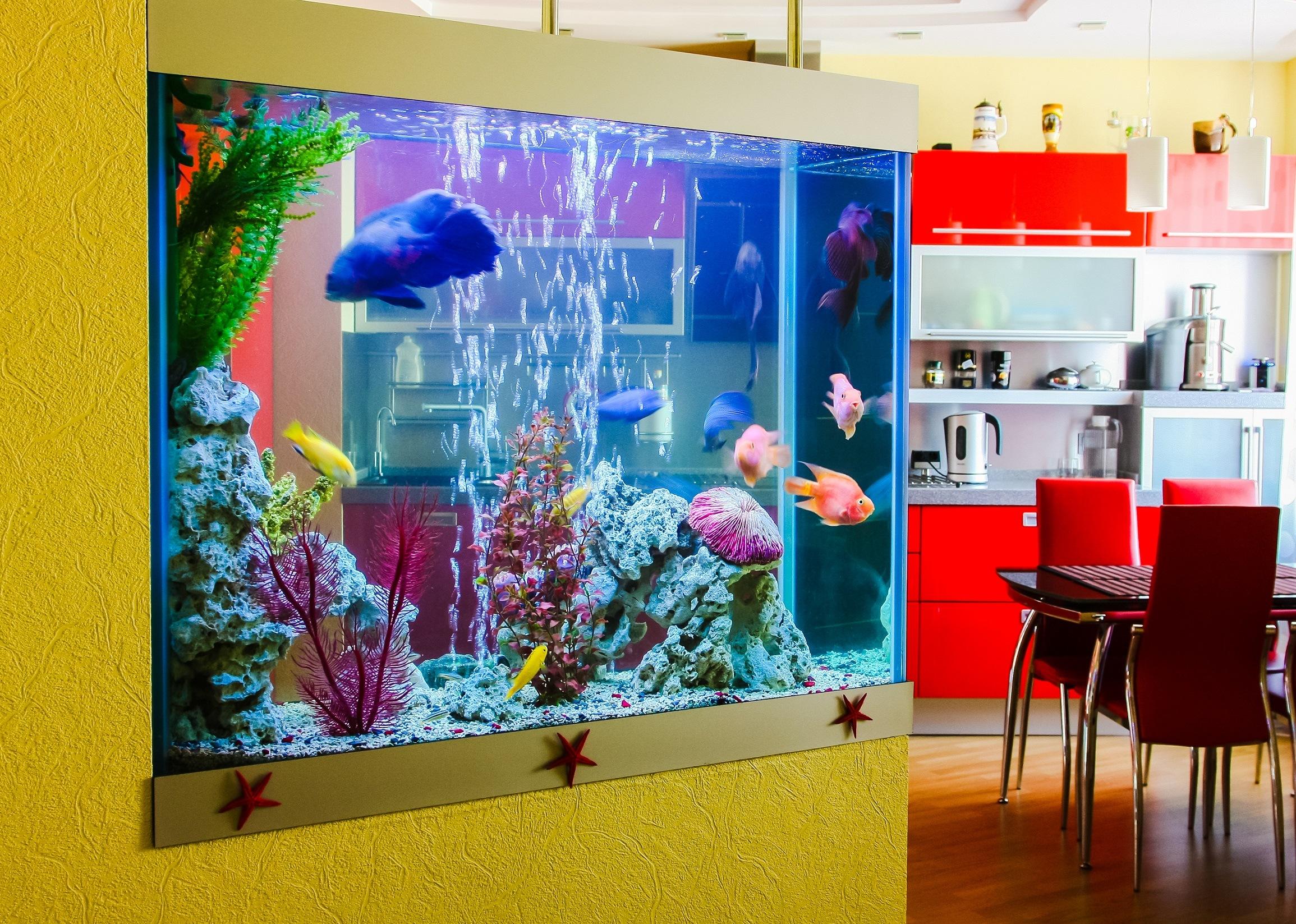 Built in home aquarium