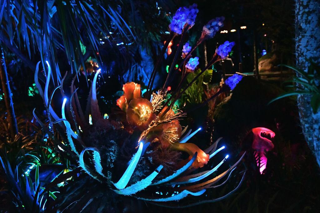 Pandora The World Of Avatar Dedication