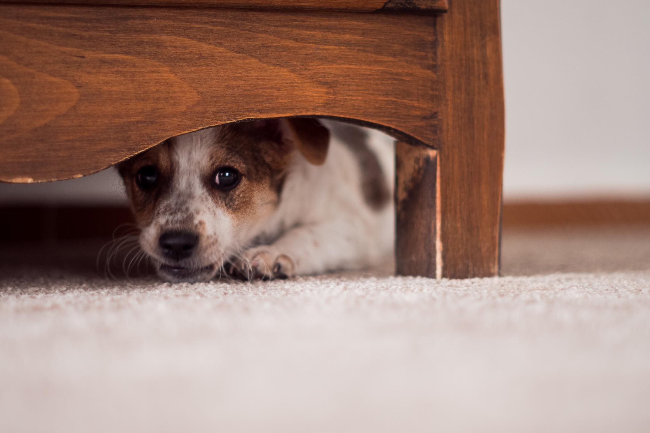 Puppy hiding under a cabinet
