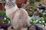 10 of the Biggest Cat Lovers of All Time, Revealed