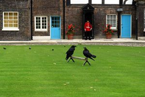 The Creepy Reason Ravens Live in the Tower of London