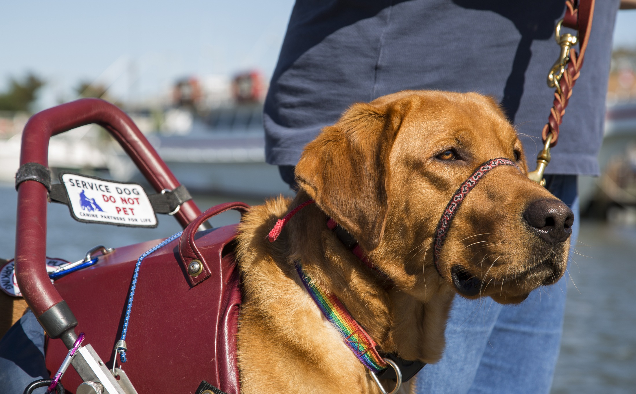 This Is the Worst Thing You Could Ever Say to Someone With a Service Dog