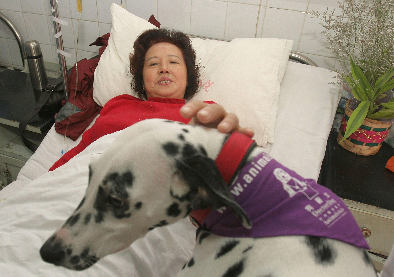 Dalmatian Therapy dog