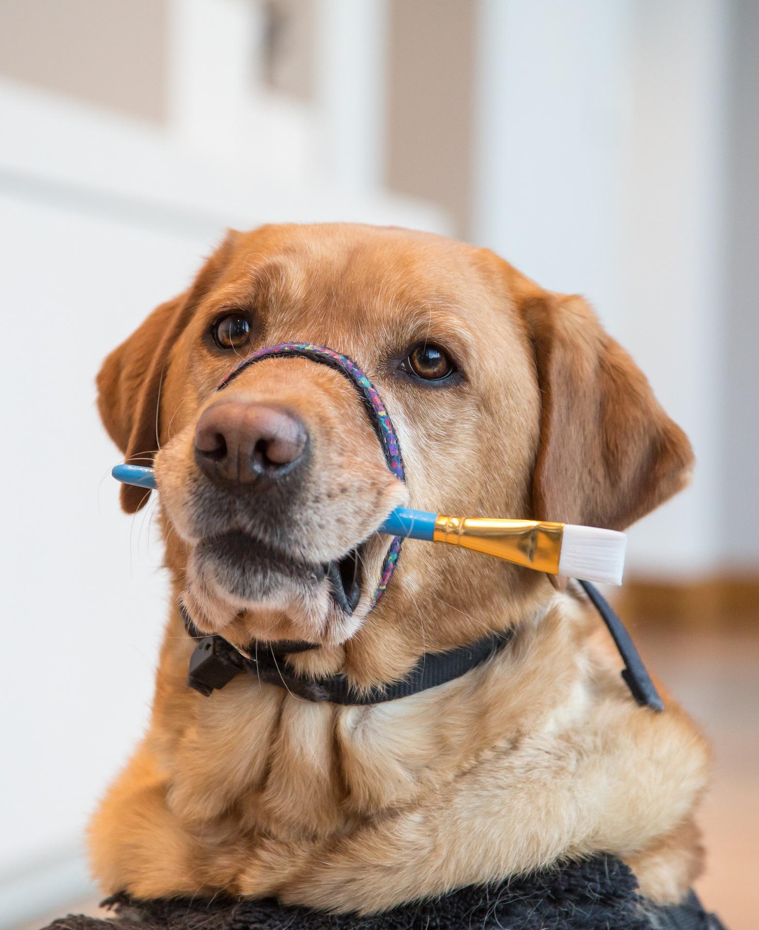 dog with paint brush