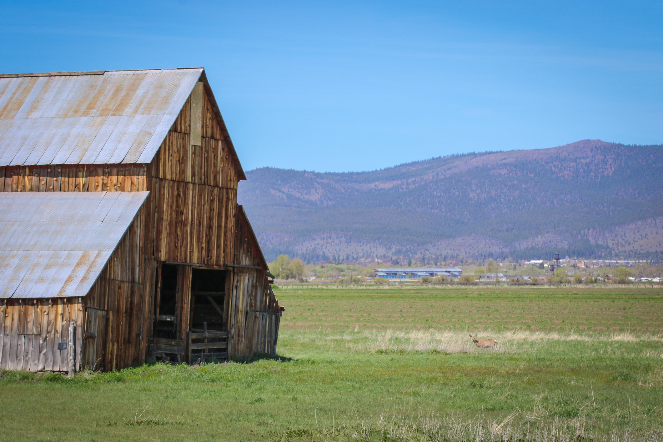 an abandoned barn in a green field