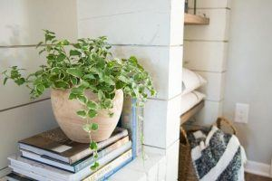 Want to Be a 'Plant Lady' Like Joanna Gaines? Discover Her Best Tips