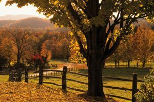 These Gorgeous Leaf-Peeping Destinations Are Totally Worth the Drive