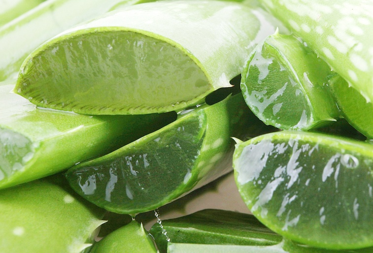 These are the weird items that you should always store in - Aloe vera culture ...