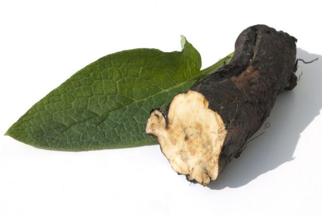 Comfrey root on a white background.
