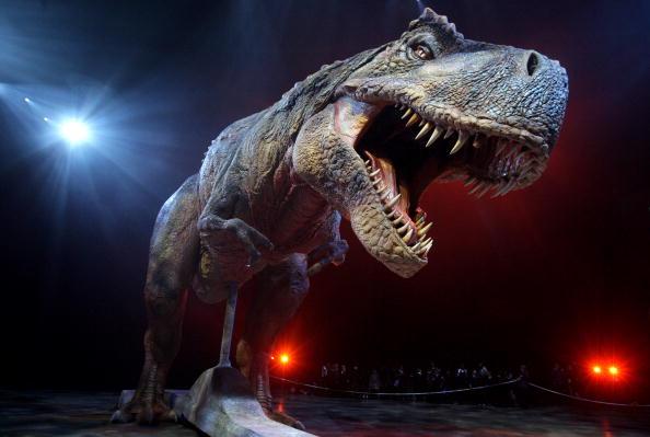 an adult tyrannosaurus rex model