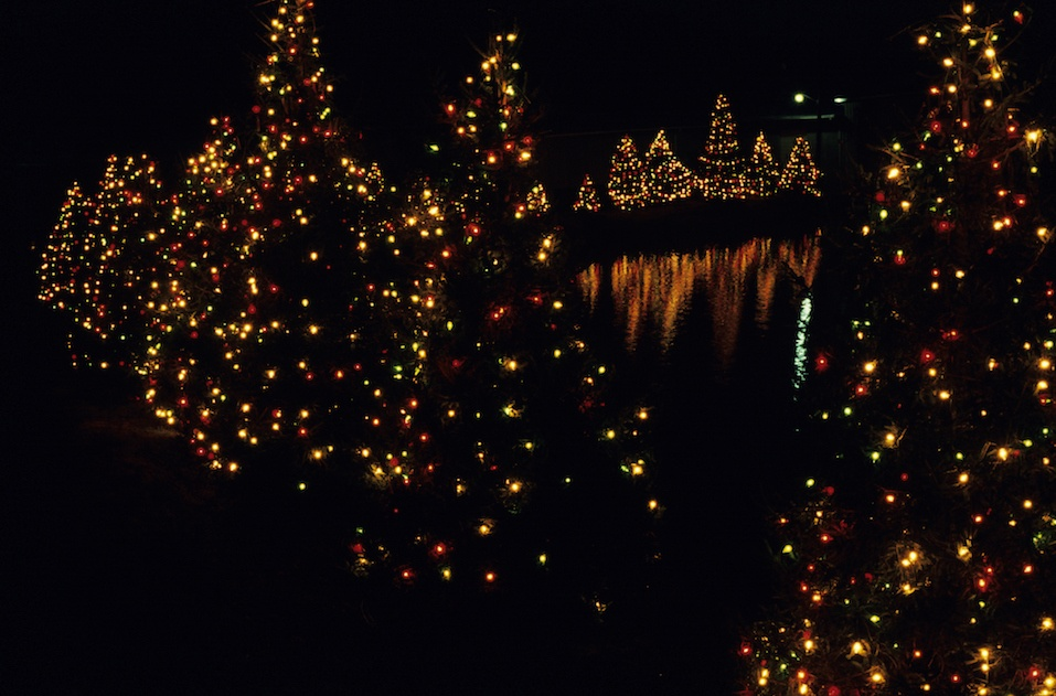 Christmas trees standing by water