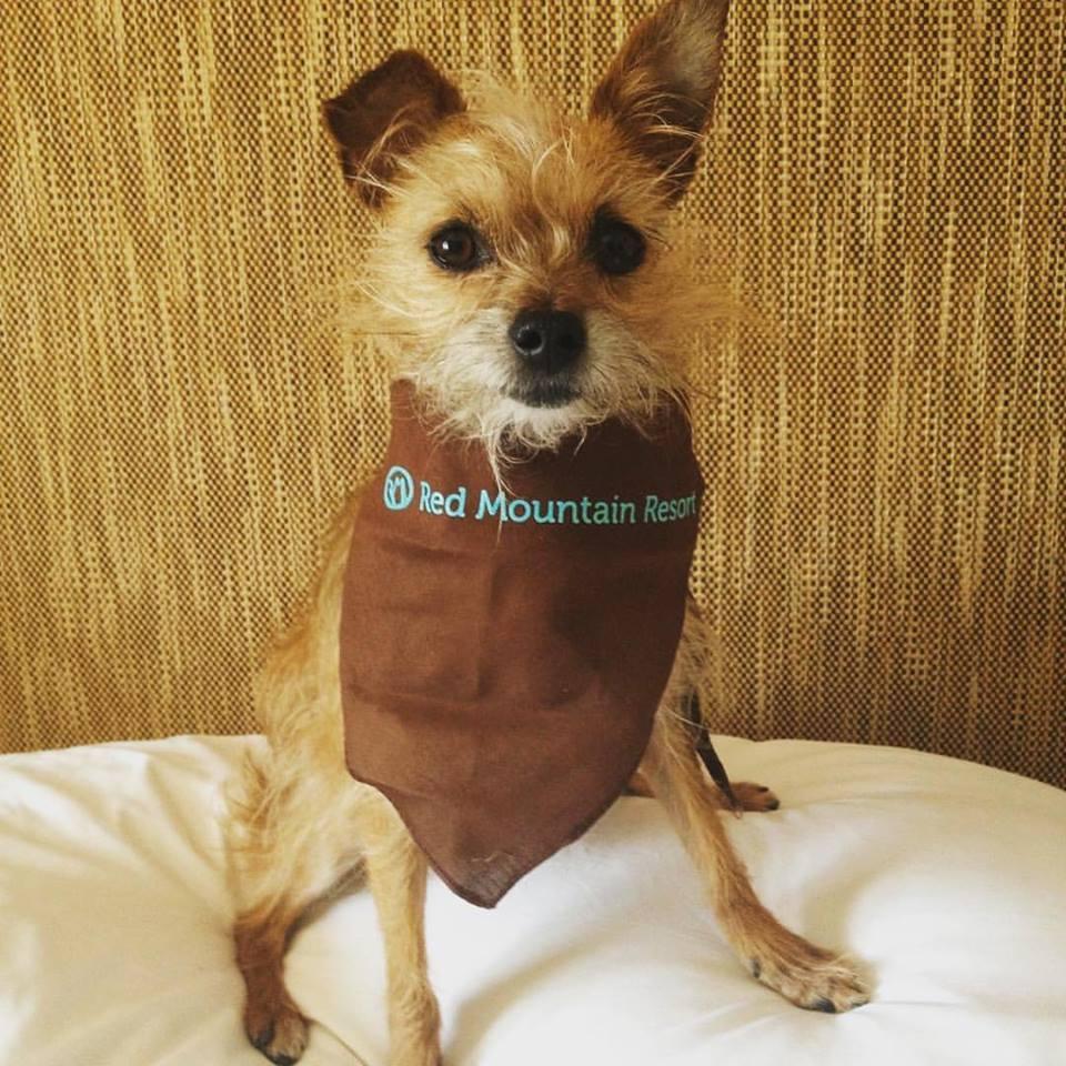Dog Friendly Hotels Utah