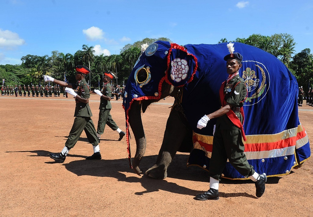 A baby elephant of the Sri Lanka Army