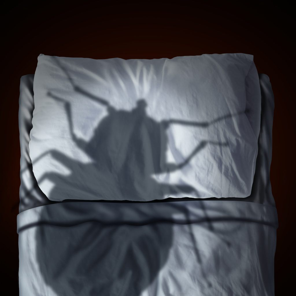 a large shadow of a bug over a bed