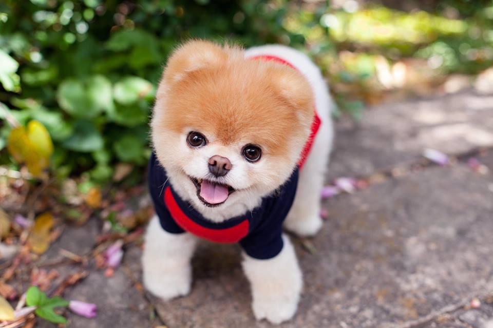 Boo dog