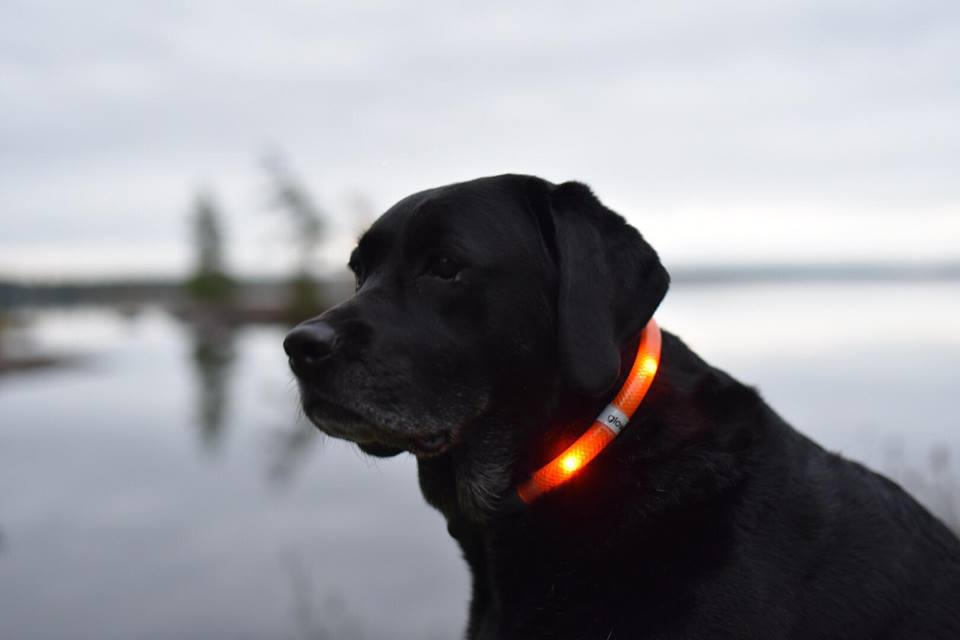 Glowdoggie light up collar