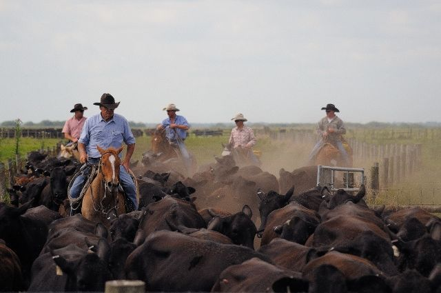 Lykes Brothers Inc Ranch