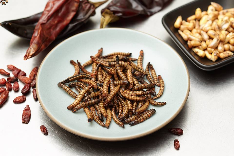 Meal Worms for eating