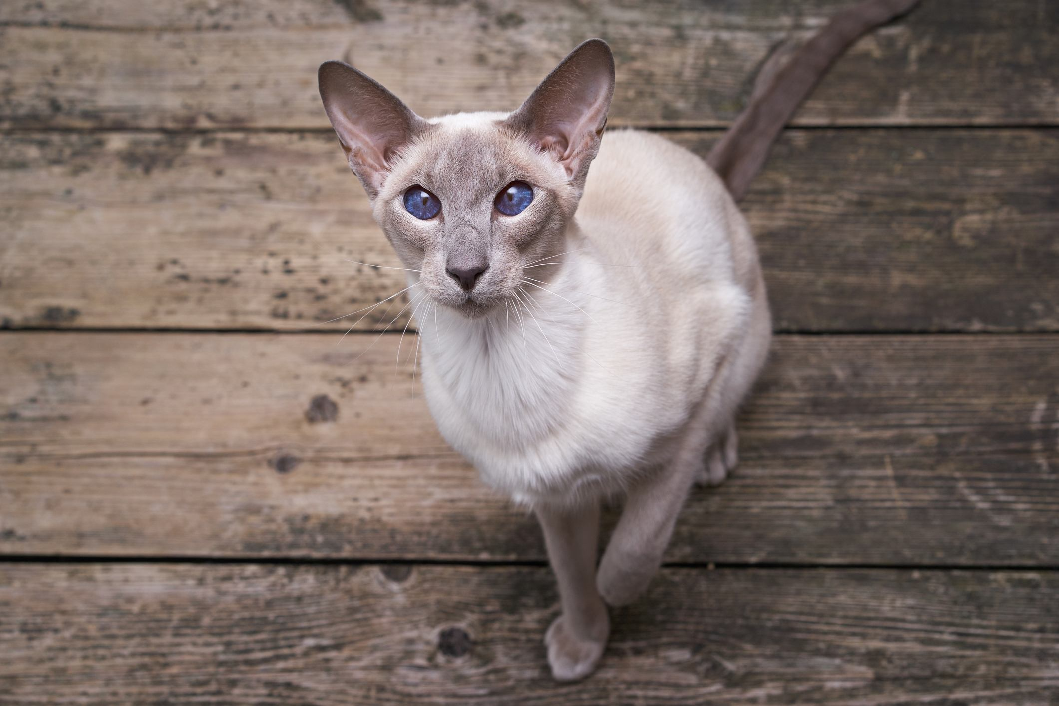 Best Cat Breeds For People With Allergies