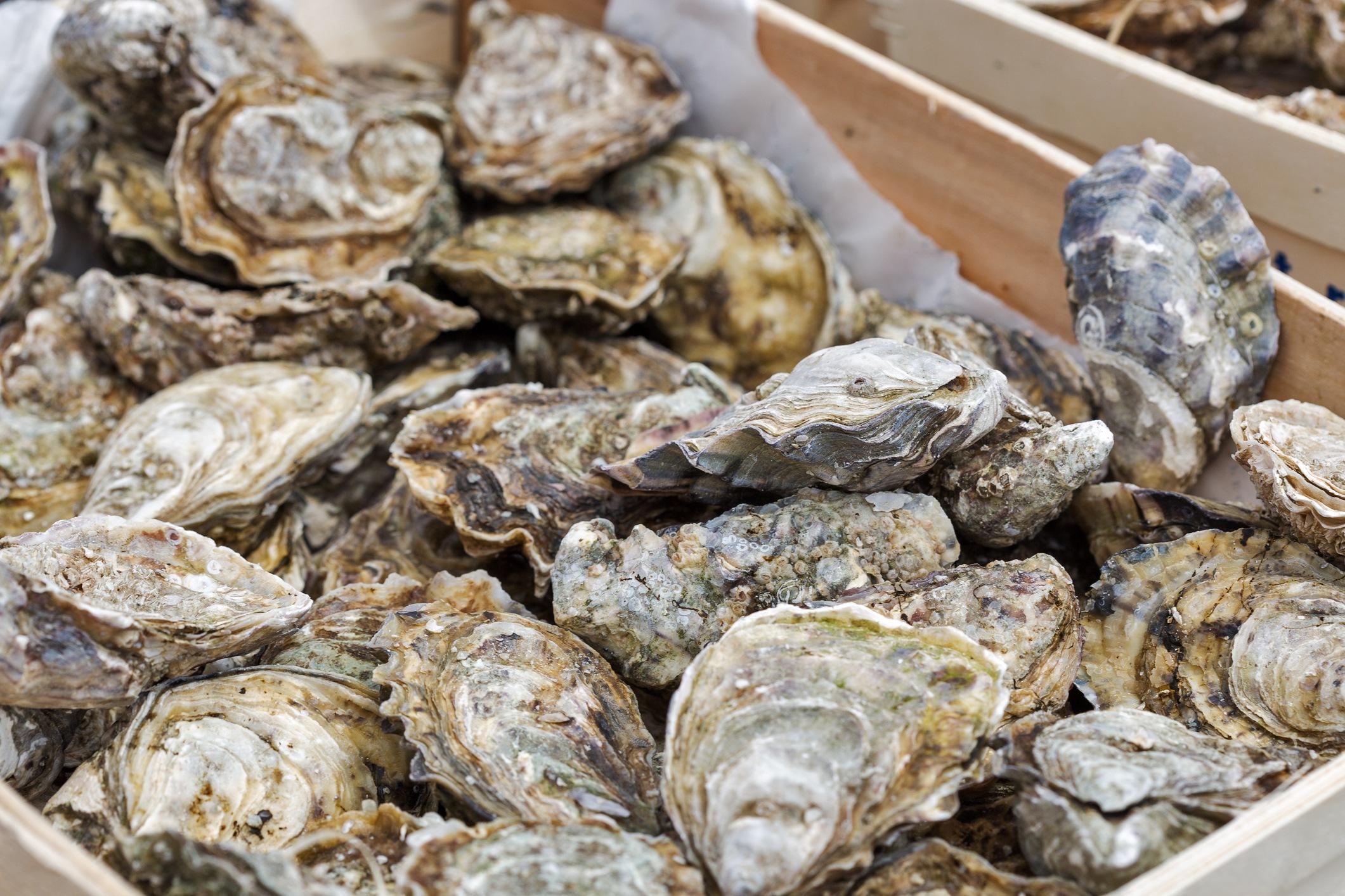 closeup of oyster shells