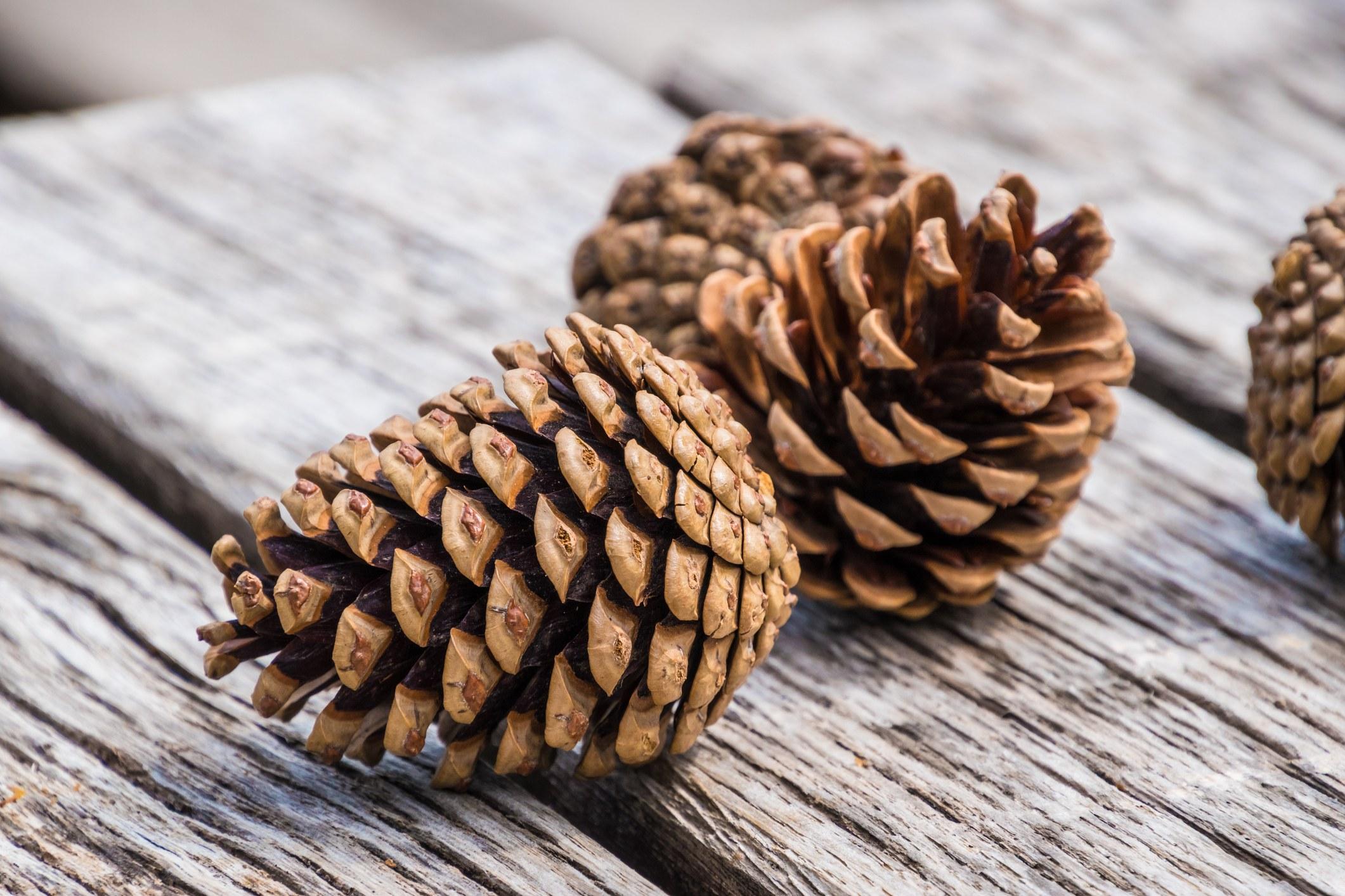 Fir pine cones lying on wood planks