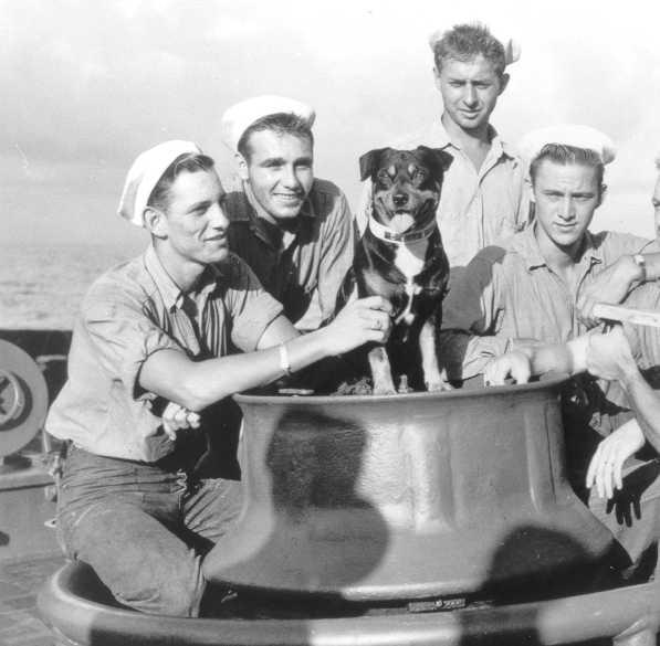 Sinbad the sailing dog
