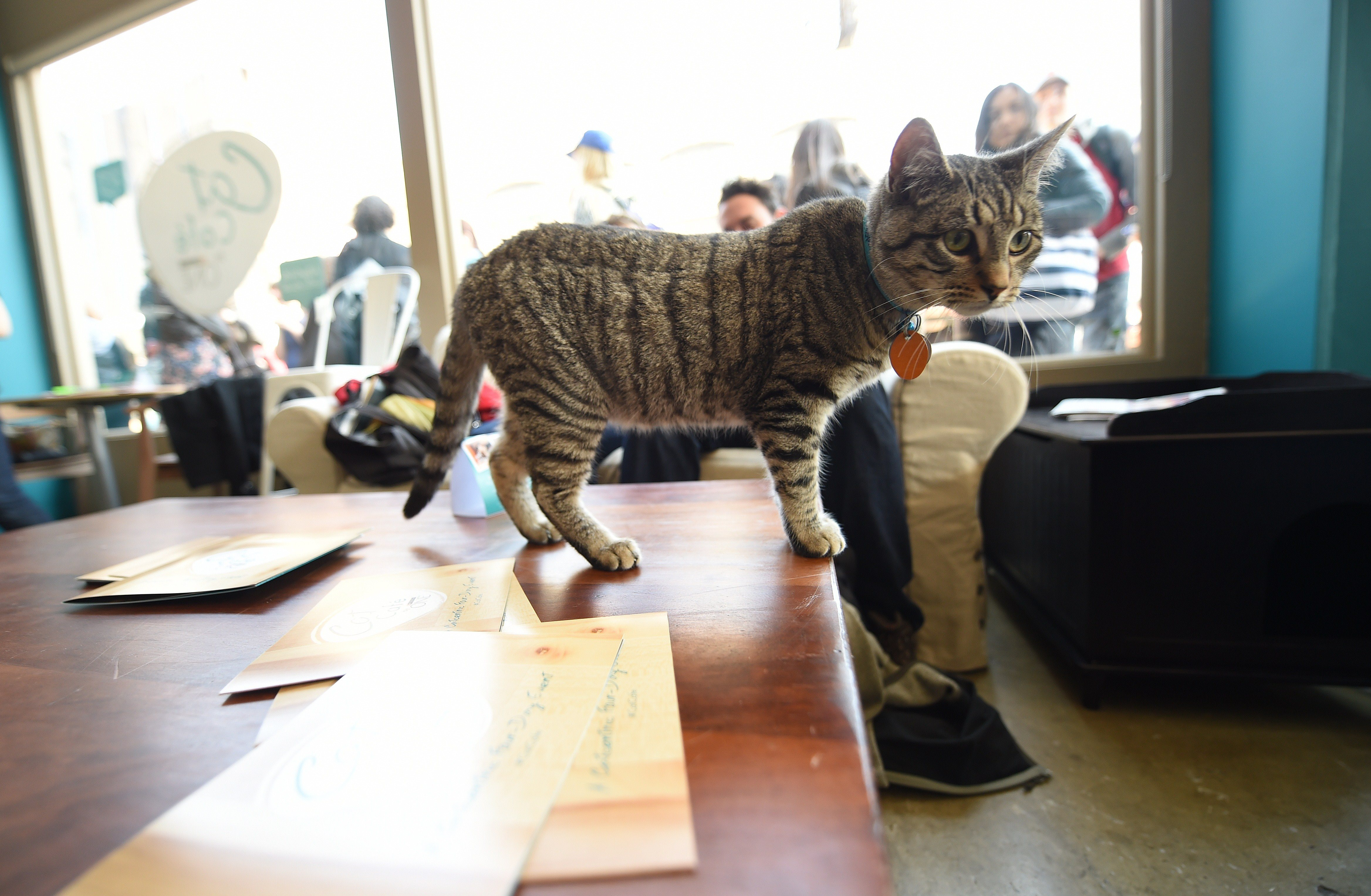 Cat Cafe NYC