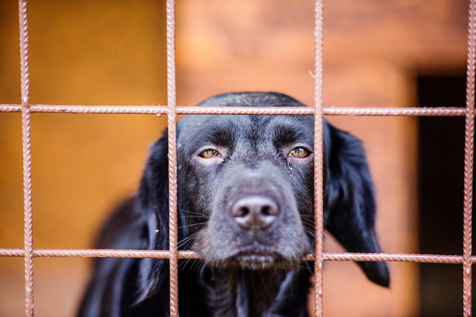 Dog in a shelter.