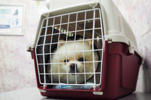 Things You Should Never Do While Flying With Your Pet