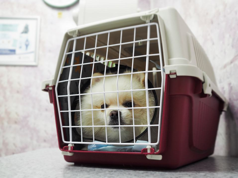Cute little white dog sitting in a cage