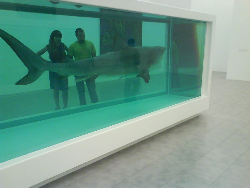 Dead Shark suspended in glass box