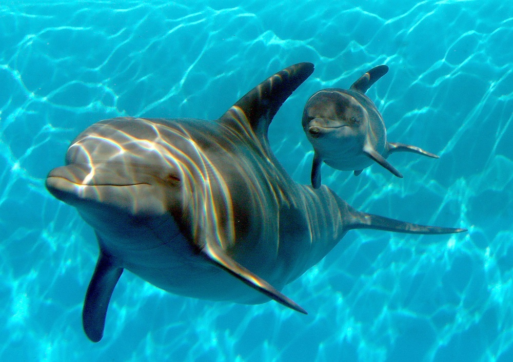 Dolphin swiming in the water