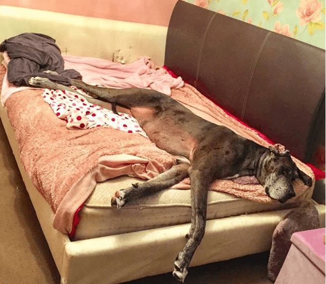 These Adorable Photos Reveal How The World S Tallest Dog