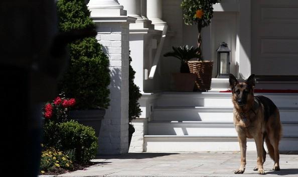 Joe Biden's dog Champ