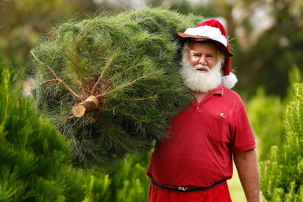 santa claus in a casual red suit carries a Christmas tree