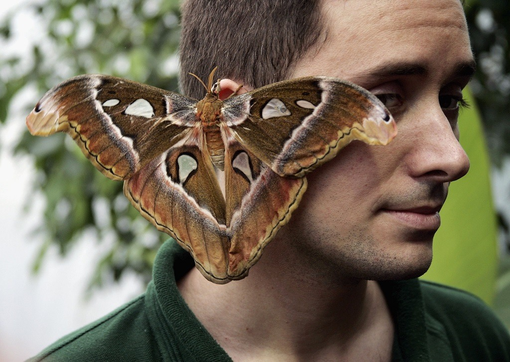 A large moth rests on a man's face